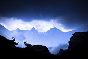 Réunion au sommet - © Léo Gayola