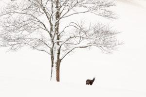 Auprès de mon arbre - Julien Arbez