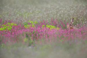 Au coeur du rose - © Ph Moës