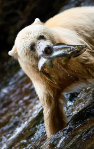 Sale temps pour un saumon - Emmanuel JUPPEAUX