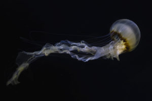 L'envol de la méduse - Eduardo Da Forno