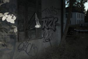 Murin de Daubenton - Yves Bilat