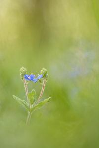 Blue twins - Florine Menetrey