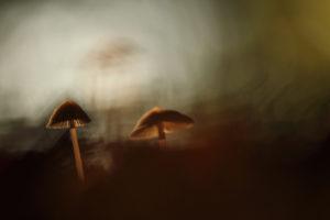 Soir d'automne - Florine Menetrey