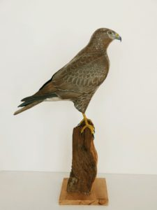 De bois et d'acier, la Buse variable. Of wood and steel, the Buzzard - éric billion