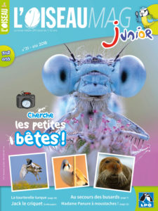 Couverture L'OISEAU MAG Junior 31 -