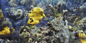 Ophiures, éponges et coraux 2. Caraïbes, 60 photographies, 55mm, f : 5,6 -