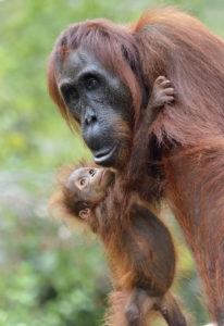 Amour maternel - Patrick Kientz