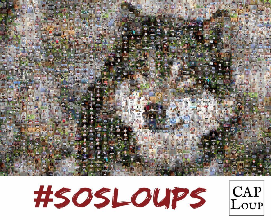 Mosaïque #SOSLoups - CAP Loup