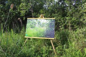 Lever de rideau sur l'étang - CENCA