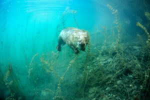 Ce qui se cache sous la surface - Rémi Masson