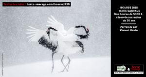 555_iris-montier.jpg -