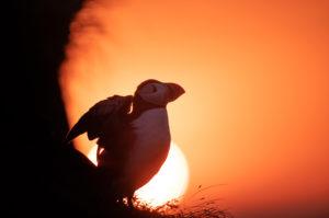ISLANDE | Soleil de Minuit dans les Westfjords - Alexandre VELLUET