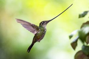Les oiseaux du nouveau monde - Maxime Aliaga