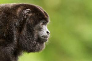 Costa Rica : Le paradis sauvage - Maxime Aliaga