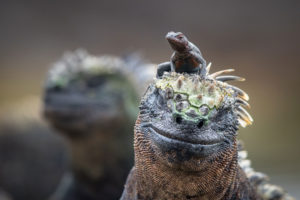 Galapagos : Les îles enchantées - Maxime Aliaga