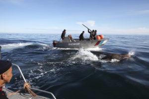 Chasse au morse dans la Mer des Tchouktches - Jean-François Lagrot