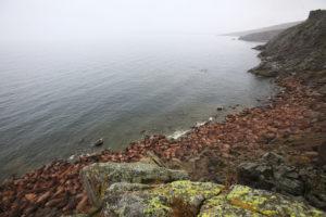 Rassemblement au pied des falaises du Cap Serdtse Kamen, non loin du détroit de Béring - ©Jean-François Lagrot