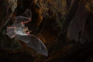 Vol de nuit - Christophe rousseau