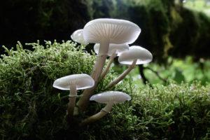 606_photo-benoit-peyre-mucidules-visqueuses.jpg -