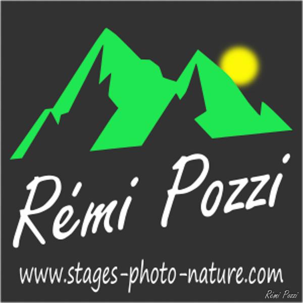 654_remi-pozzi.jpg -