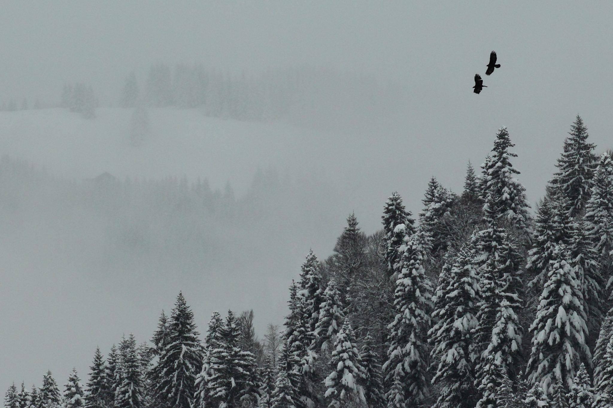Amours en hiver - Grégory Bonnet