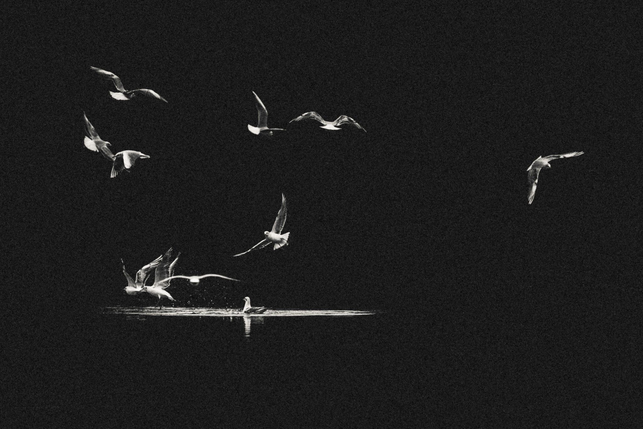 Carrousel - Emmanuel Tardy