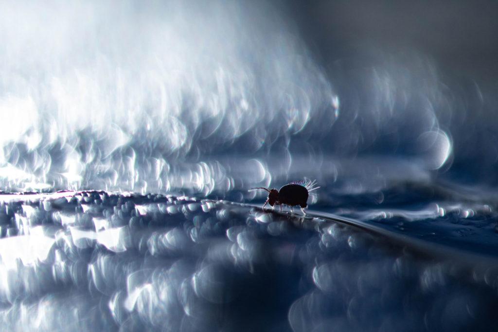 Turbulences - Maussion Didier