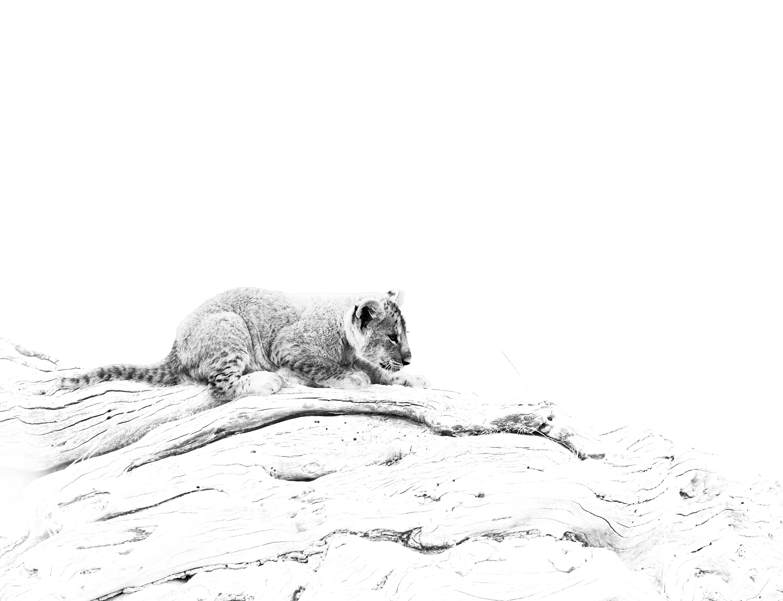 764_lion.jpg -