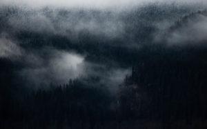 forêt humide d'Alaska - Antonin Charbouillot