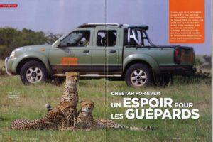 Cheetah For Ever - Un espoir pour les guépards