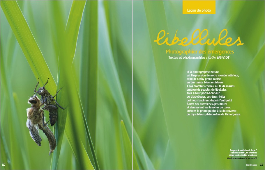 Macrophotographie : les émergences de libellules - Avril mai 2017