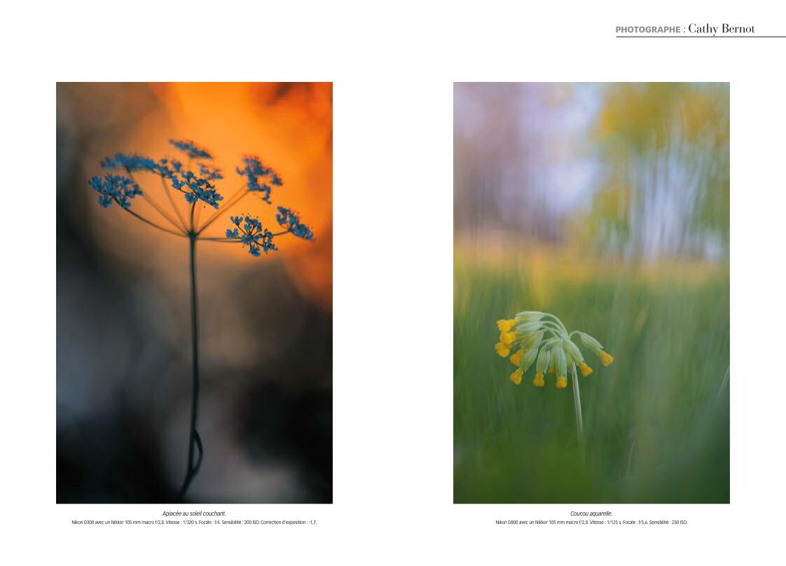 Portfolio fleurs