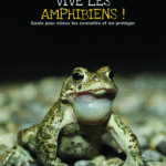 Vive les amphibiens !