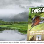 L'Oiseau Magazine