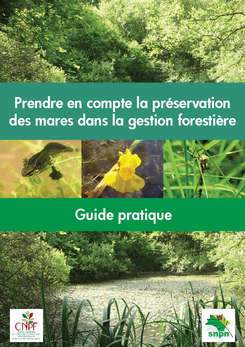 Prendre en compte la préservation des mares dans la gestion forestière