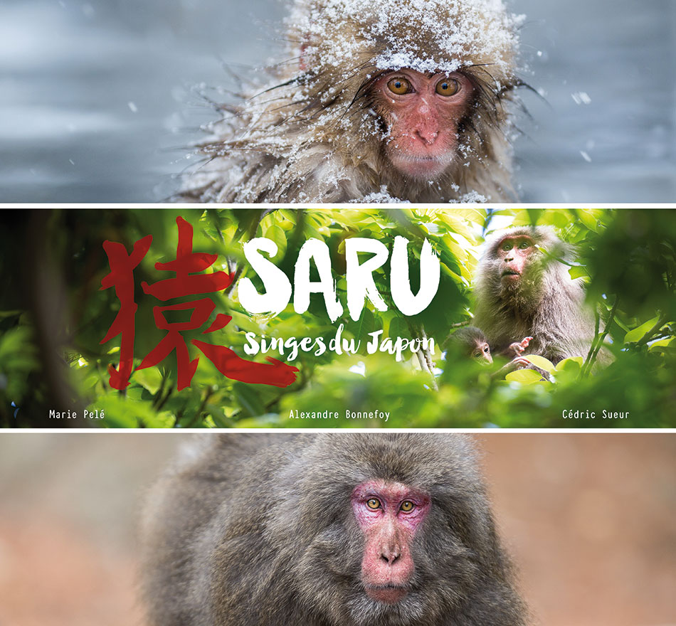 Saru - Singes du Japon