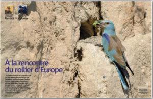A la rencontre du Rollier d'Europe
