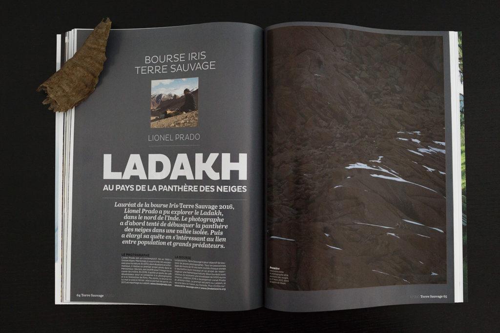 LADAKH, SUR LES TRACES DU LÉOPARD DES NEIGES