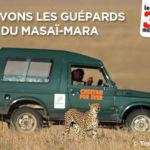 Aidez-nous à sauver les guépards du Masaï Mara