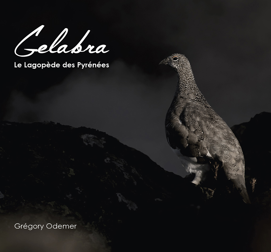 Gelabra, le Lagopède des Pyrénées - Ariège et Haute-Garonne