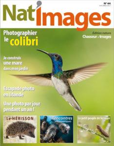 Photographier le Colibri