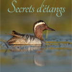 Secrets d'étangs