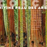 ECORCES, la Divine Peau des Arbres (Portfolio 8p)