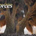 ECORCES, peaux d'arbres (Portfolio 8p)