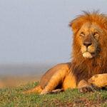 Le Roi du Savanaland