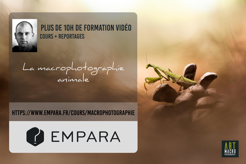 """Formation Vidéo """"La Macrophotographie Animale"""""""
