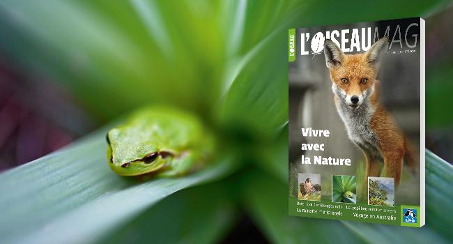 Revue trimestrielle L'Oiseau Mag