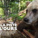 Sur la piste de l'ours