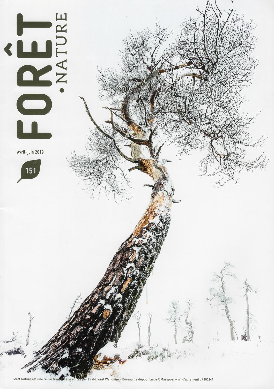 Forêt . Nature - Article consacré aux Hautes Fagnes